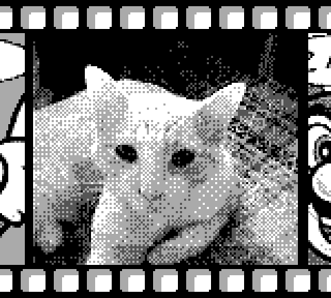 Grayscale image of a cat, taken with the Game Boy Camera.